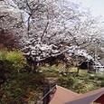 4/11お花見キャンプ