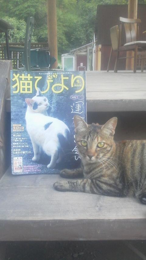憧れの『猫びより』