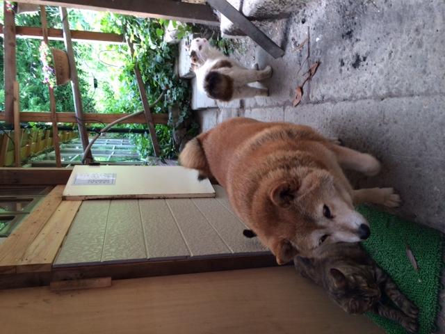 犬と猫の日常!